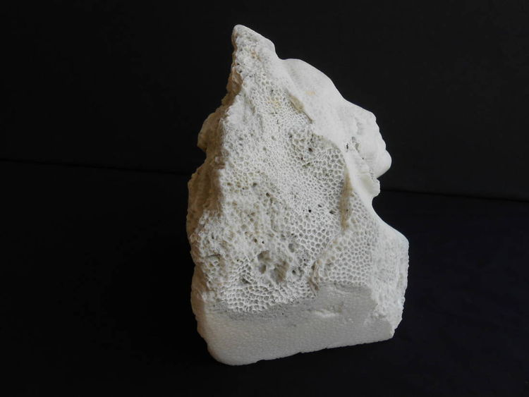 Sea Beauty by David Willis - search and link Sculpture with SculptSite.com