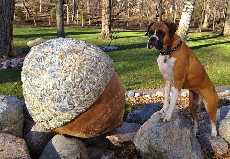 Acorn by Carol Fleming - search and link Sculpture with SculptSite.com
