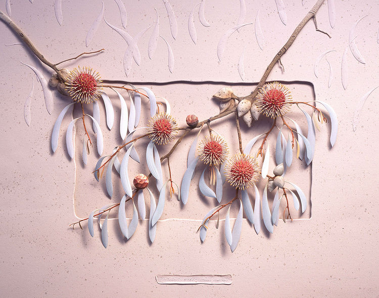 Pincushion Hakea (Hakea laurina) by Ray Besserdin - search and link Sculpture with SculptSite.com
